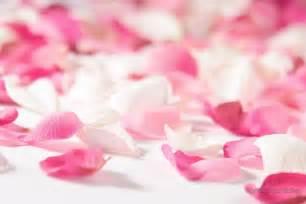 imagenes de rosas fondo fondos y postales fondos rom 225 nticos 2