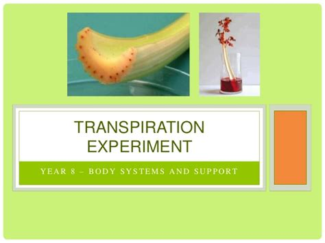 design experiment rate of transpiration transpiration experiment