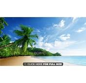 Nature Scenery Sea Beach Sky Clouds Palm Trees Ocean