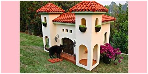 Outdoor Cat Enclosures