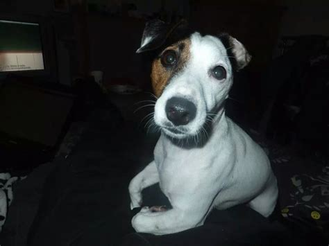 rehome my unfortunately to rehome my ripon pets4homes