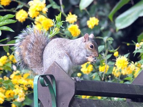Keeping Squirrels Out Of Garden by How To Keep Squirrels Out Of Your Garden Wildlife Fencing
