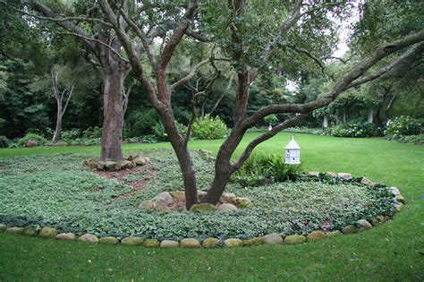 oak landscaping oaks with dead nettle traditional landscape santa barbara by donna landscape designer