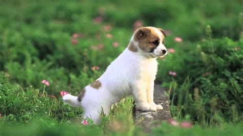 a baby puppy baby wallpapers baby animals
