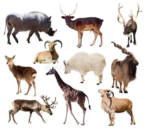 sistema de mam 237 feros depredadores aislado sobre blanco sistema de animales del mam 237 fero sobre blanco foto de