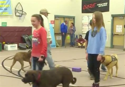 schools for service dogs colorado elementary school students service for local veteran in need