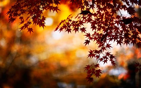wallpaper free images autumn background images wallpapersafari