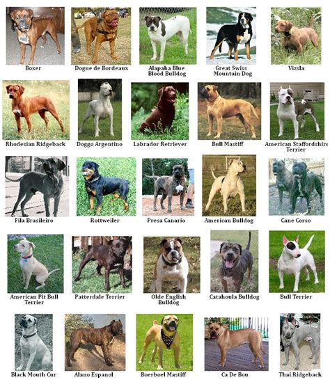 pitbull types different types of dogs