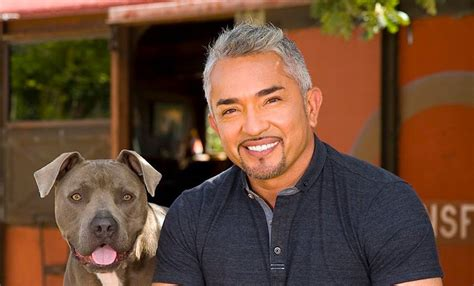 whisperer with cesar millan cesar millan slapped with lawsuit after attacks petful