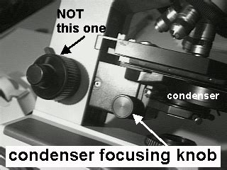 Condenser Adjustment Knob by Lab 1 Biology 20 With Mohan At California State