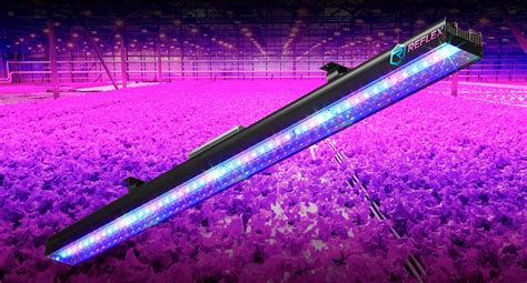 uvb led grow lights why uva should be included in your led grow lights part