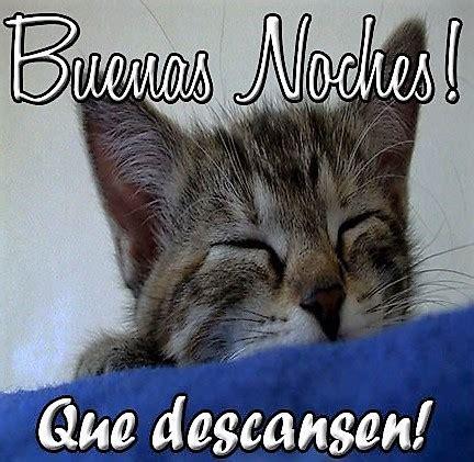 imagenes buenas noches con gatos imagenes de gatos con frases de buenas noches