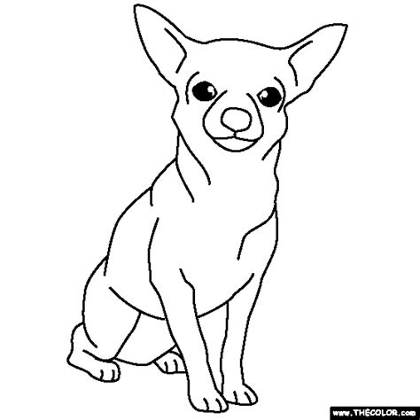 Coloring Pages Chihuahua Dogs | chihuahua coloring pages for kids coloring home