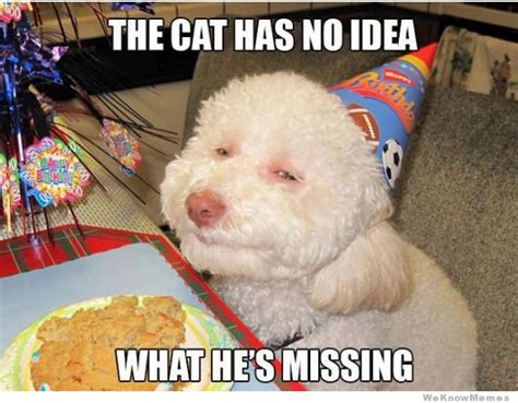 Birthday Dog Meme - why we indians love dogs and not cats scooppick com