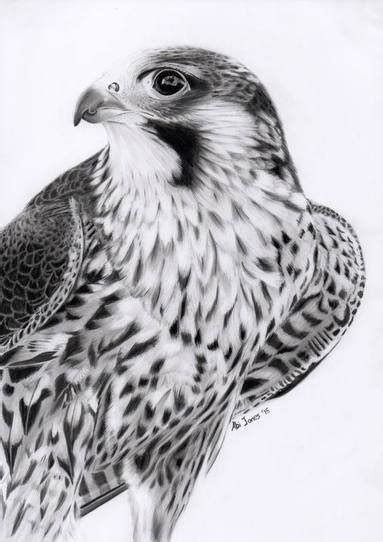 peregrine falcon tattoo peregrine falcon by abigail jones graphite magic