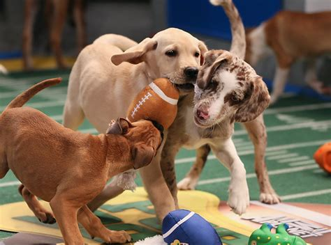 puppy bowl 22 epic ideas for your list
