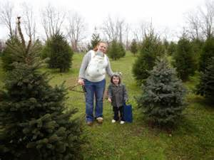 2304 miles christmas tree farms old stone farm and