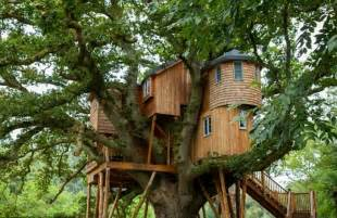 live in harmony with nature in these tree house