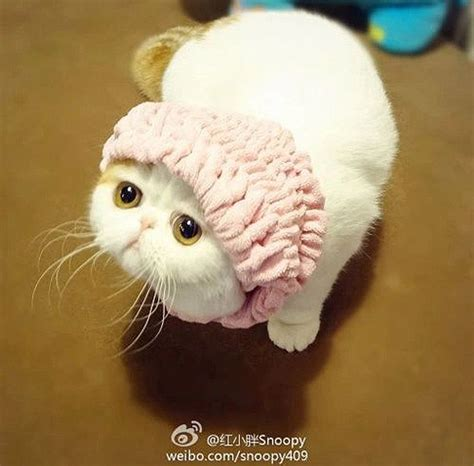 a snoopy cat and her fashion wardrobe 30