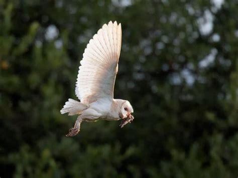 Jp Burung Hantu 1 かわいいだけじゃない 狩りの名手フクロウの獲物の捕獲画像 カラパイア