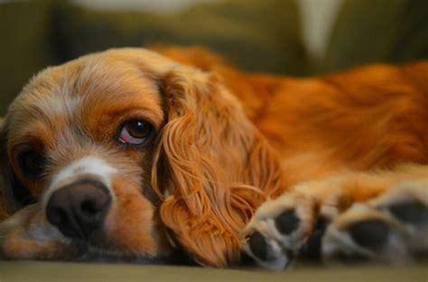 precious dog    time  huffpost
