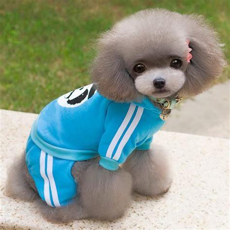 dog coat pattern for chihuahua selmai fleece dog coat pattern bear small puppy chihuahua