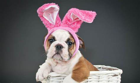 puppy tubs peachtree city ga how to include your in your easter celebration