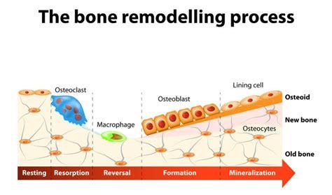 ceramic bone graft synthetic ceramic bone graft substitutes brian kwon md