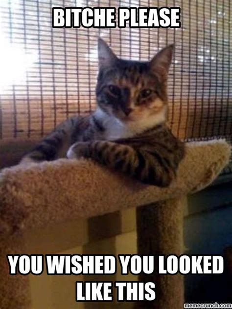 Sassy Cat Meme - sassy cat