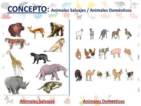 imagenes de animales salvajes y domesticos actividades los animales ppt video online descargar