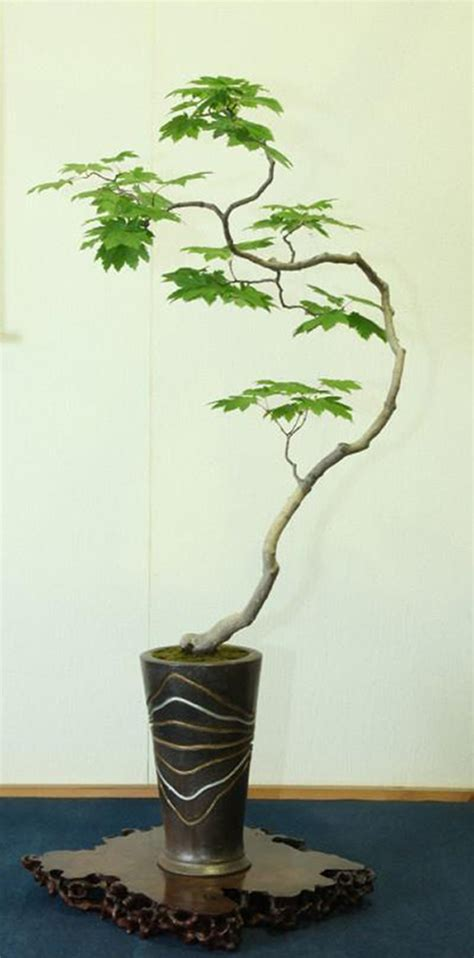 here s a thought bonsai 20 thoughts on bunjin bonsai without a doubt the best discussion we ve had bonsai bark