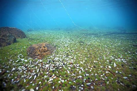 aquascape snail indonesia lake matano sulawesi indonesia aquatic project