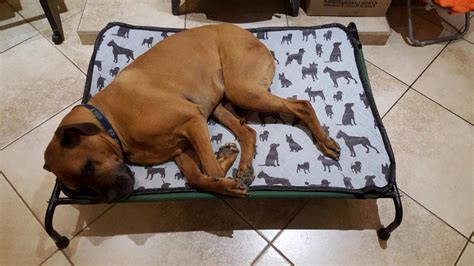 Hound Sleeper by Hound Sleeper Beds Products Pricing