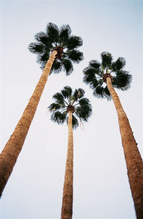 summer vibes palm trees hd urban outfitters blog tumblr tuesday natalee ranii