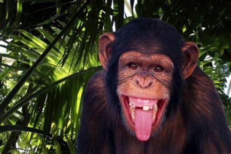 imagenes de animales sacando la lengua descargar imagenes de monos feos graciosos para facebook