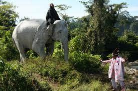 Gajah Putih 10 hewan yang di anggap keramat di dunia biru hell always