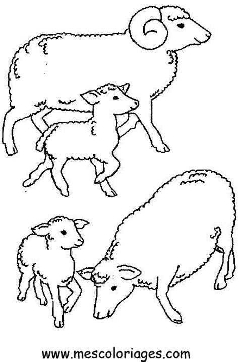 Coloriage Mouton 224 Imprimer