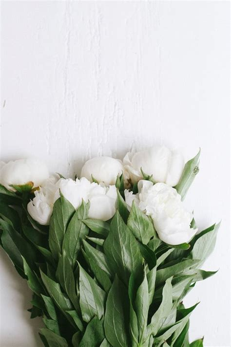 5 Things White And Beautiful 2 by Signs Of Flowers Flowers