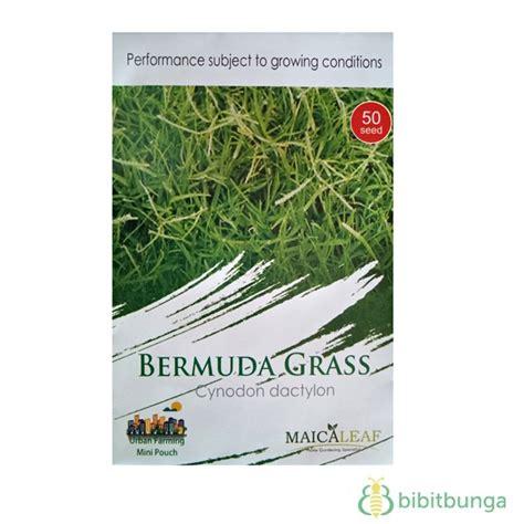 Biji Benih Rumput Bermuda benih maica leaf bermuda grass rumput golf 50 biji