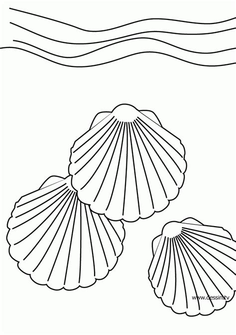 seashell color seashell coloring pages az coloring pages