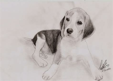 imagenes a la lapiz 10 dibujos a lapiz de animales dibujos a lapiz