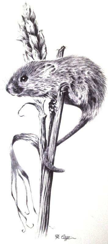 Mouse Pen Drawing ballpoint pen drawings by richard coppin