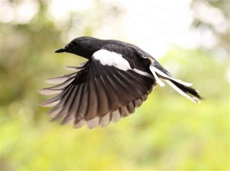 Birds Of Bangladesh Essay by Birds Of Bangladesh Essay Illustrationessays Web Fc2