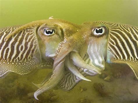 Underwater Photographer Karin Brussaard's Gallery ...