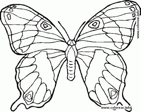 coloring pictures to print preschool coloring page pictures print animals mariposa