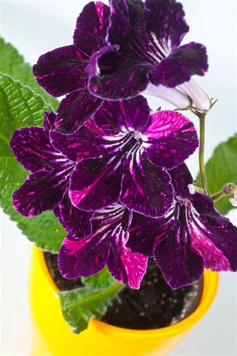 indoor flowers add some color 5 cheery easy to grow indoor flowering
