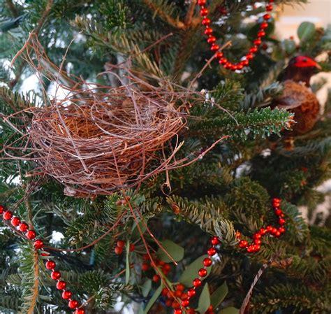 birds evergreen branches garden in delight