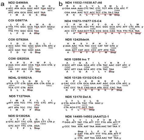 Balanced Scorecard Essay by Apple Computers Balanced Scorecard Essays Articlessociology X Fc2