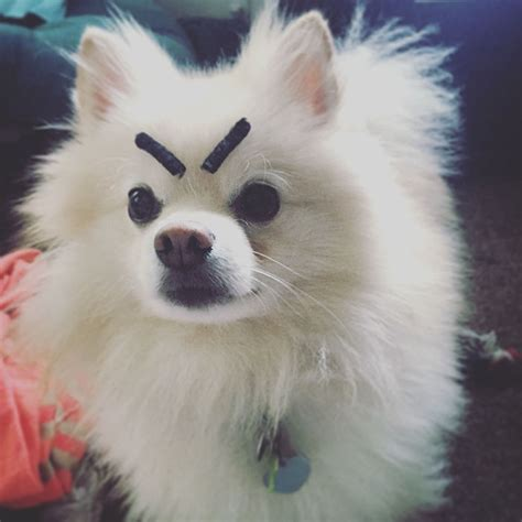 do dogs eyebrows 10 dogs with eyebrows bored panda