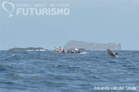 boat riding wave azores whale watching futurismo wave riding with dolphins